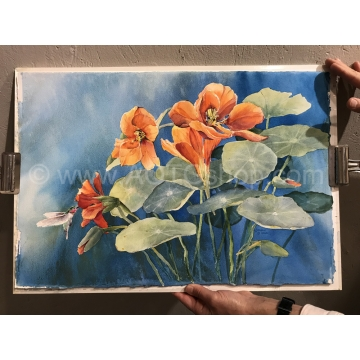 """Nasturtiums with Hummingbird"" Original Watercolor by Sonja Hamilton (Local Pick-Up Only)"