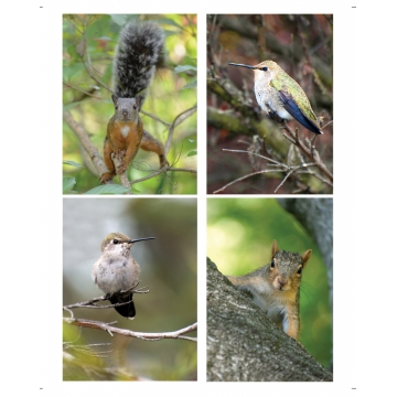 Fur & Feathers Mini Cards, Set of 4 by Photographer Susan Stoll (Available for Shipping or Local Pick-up)