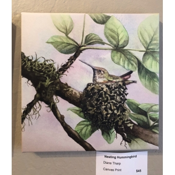 "Canvas Print of Watercolor Painting ""Nesting Hummingbird"" by Diane Tharp (Available for shipping or local pick-up )"