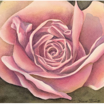 Pink Rose Original Watercolor by Diane Tharp (Available for Shipping or Local Pick-Up)