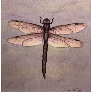 Pink Dragonfly Original Watercolor Painting by Diane Tharp (Available for shipping or local pick-up )