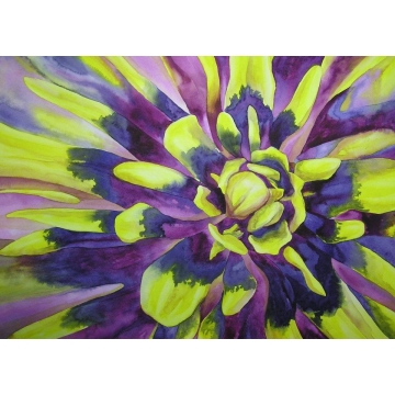 "Matted Original Watercolor Painting ""Aster Burst"" by Diane Tharp (Available for Shipping or Local Pick-Up)"