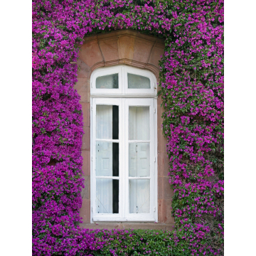 """Bougainvillea Window, Spain""  Giclée Print on Canvas by Darlene Riel (Available for Shipping or Local Pick-Up)"
