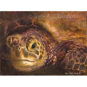 Franklin the Green Sea Turtle Original Oil Painting by Sylviane Giacoletto (local pick-up only)