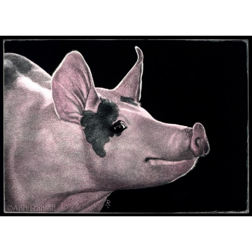 """""""Hammin' it Up"""" - Original Scratchboard Drawing by Ann Ranlett (Local Pick-Up Only)"""