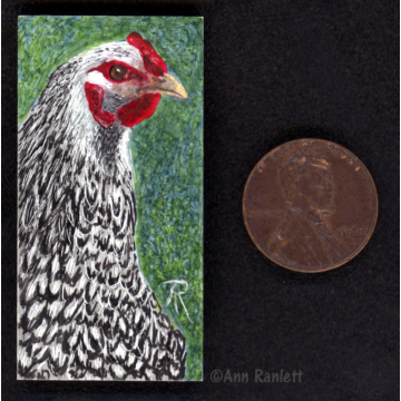 Miniature Original Chicken Drawing (Framed) by Ann Ranlett (Available for Shipping or Local Pick-Up)