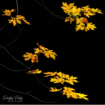 "Original Image on Metal ""Conclusion of Fall"" by Doug Parks (Local Pick-Up Only)"