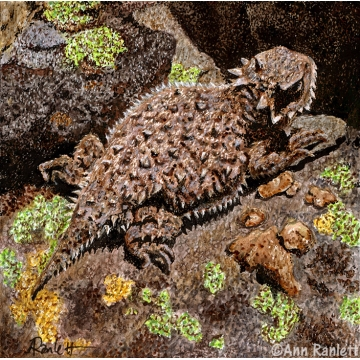 Horned Lizard Original Mixed Media by Ann Ranlett (Available for Shipping or Local Pick-Up)