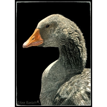 Lucy the Goose - Print on Metal, by Ann Ranlett (Available for Shipping or Local Pick-Up)