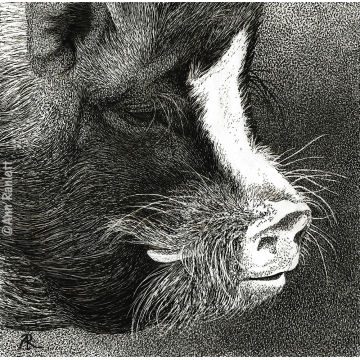 Pot-bellied Pig - Matted Print, by Ann Ranlett (Available for Shipping or Local Pick-Up)