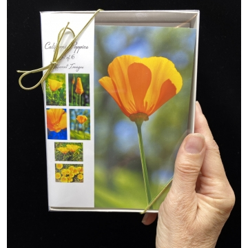 California Poppies Cards Set of 6 by Photographer Susan Stoll (Available for Shipping or Local Pick-Up)