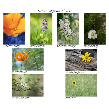 Native California Cards (Set of 8) by Photographer Susan Stoll (Available for Shipping or Local Pick-Up)
