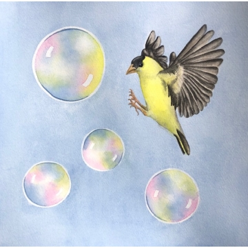 """Bubble Wonder, Goldfinch"" - Original Framed Watercolor Painting by Diane Tharp (Available for shipping or local pick-up )"