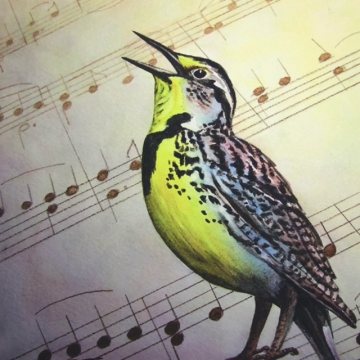 "Matted Giclée Print of a Watercolor Painting ""Meadowlark Music"" by Diane Tharp (Available for Shipping or Local Pick-Up)"