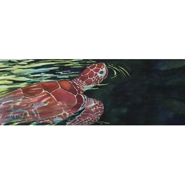 "Original framed watercolor painting, ""Maui Turtle"", by Diane Tharp (Available for Shipping or Local Pick-Up)"